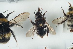 ( - NOAPI576)  @11 [ ] CC-NC-SA (2014) Arnstein Staverlokk Norwegian Institute of Nature Research