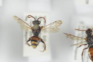 ( - NOAPI218)  @11 [ ] CreativeCommons - Attribution Non-Commercial Share-Alike (2014) Arnstein Staverlokk Norwegian Institute of Nature Research
