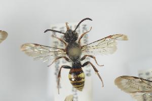 ( - NOAPI228)  @11 [ ] CreativeCommons - Attribution Non-Commercial Share-Alike (2014) Arnstein Staverlokk Norwegian Institute of Nature Research