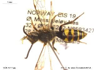 ( - NOAPI027)  @11 [ ] CreativeCommons - Attribution Non-Commercial Share-Alike (2014) Arnstein Staverlokk Norwegian Institute of Nature Research