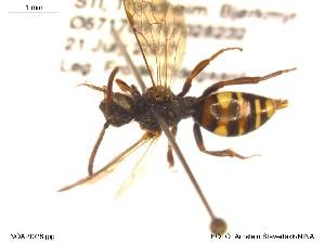 ( - NOAPI028)  @11 [ ] CreativeCommons - Attribution Non-Commercial Share-Alike (2014) Arnstein Staverlokk Norwegian Institute of Nature Research