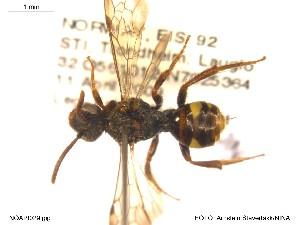 ( - NOAPI029)  @11 [ ] CreativeCommons - Attribution Non-Commercial Share-Alike (2014) Arnstein Staverlokk Norwegian Institute of Nature Research