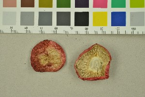 (Russula nana - O-F-260030)  @11 [ ] by-nc-sa (2015) Unspecified University of Oslo, Natural History Museum