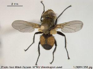 (Eliozeta - NOBRA 356)  @15 [ ] Creative Commons – Attribution Non-Commercial Share-Alike (2015) NTNU University Museum, Department of Natural History NTNU University Museum, Department of Natural History