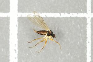 (EmpididaeGM - NHMO-DAR-12284)  @11 [ ] by-nc-sa (2017) Unspecified University of Oslo, Natural History Museum