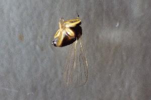 (EmpididaeGM - NHMO-DAR-12287)  @11 [ ] by-nc-sa (2017) Unspecified University of Oslo, Natural History Museum
