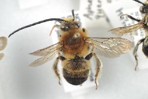 ( - HYMNI737)  @11 [ ] CC-NC-SA (2014) Arnstein Staverlokk Norwegian Institute of Nature Research