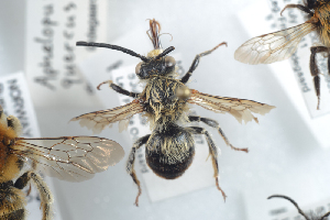 ( - HYMNI738)  @11 [ ] CC-NC-SA (2014) Arnstein Staverlokk Norwegian Institute of Nature Research
