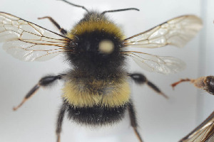 ( - HYMNI752)  @11 [ ] CC-NC-SA (2014) Arnstein Staverlokk Norwegian Institute of Nature Research
