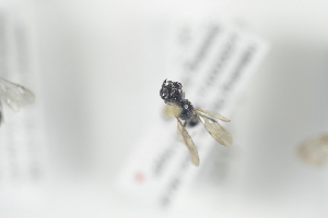 ( - NOFOR186)  @12 [ ] CreativeCommons - Attribution Non-Commercial Share-Alike (2014) Arnstein Staverlokk Norwegian Institute of Nature Research