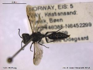 ( - NOSPH028)  @12 [ ] CreativeCommons - Attribution Non-Commercial Share-Alike (2013) Arnstein Staverlokk Norwegian Institute of Nature Research