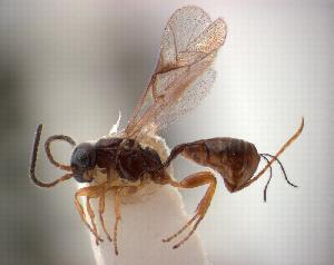 (IchneumonidaeDW - NZAC04037876)  @15 [ ] Unspecified (default): All Rights Reserved  Unspecified Unspecified