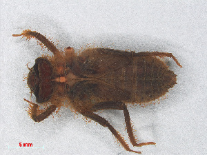 (Idomacromiinae - RMNH.INS.501649)  @14 [ ] CreativeCommons Attribution Non-Commercial Share-Alike (2013) Unspecified Naturalis Biodiversity Center