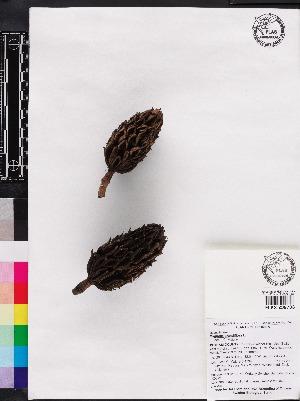 ( - OSBAR000229)  @11 [ ] Copyright (2014) Florida Museum of Natural History Florida Museum of Natural History