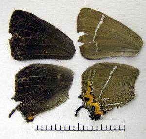 ( - Rvcoll_15-M152)  @11 [ ] Institut de Biologia Evolutiva (2014) Roger Vila Oxford Brookes University