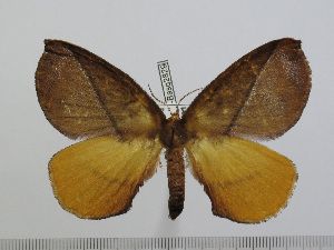 (Epijana - BC-Basq 2829)  @14 [ ] Copyright (2011) Patrick Basquin Research Collection of Patrick Basquin