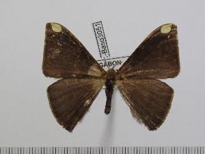 (Drepanojana - BC-Basq 3051)  @12 [ ] Copyright (2011) Patrick Basquin Research Collection of Patrick Basquin