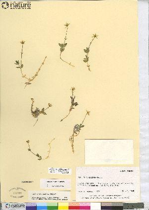 (Stellaria alaskana - CCDB-23308-B10)  @11 [ ] CreativeCommons - Attribution Non-Commercial Share-Alike (2014) CBG Photography Group Centre for Biodiversity Genomics