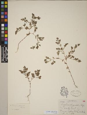 (Paronychia - CCDB-23367-B08)  @11 [ ] CreativeCommons - Attribution Non-Commercial No Derivatives (2014) Linda Jennings University of British Columbia