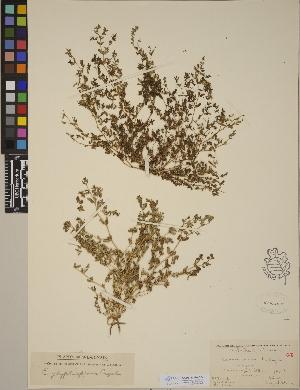 (Euphorbia humistrata - CCDB-23390-G04)  @11 [ ] CreativeCommons - Attribution Non-Commercial No Derivatives (2014) Linda Jennings University of British Columbia