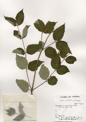 ( - PDBK1999-0729)  @11 [ ] Copyright (1999) Ki Joong Kim Korea University Herbarium (KUS)