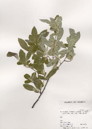 ( - PDBK2000-0811)  @11 [ ] Copyright (2000) Ki Joong Kim Korea University Herbarium (KUS)