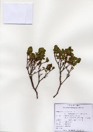 ( - PDBK2004-1157)  @11 [ ] Copyright (2004) Ki Joong Kim Korea University Herbarium (KUS)