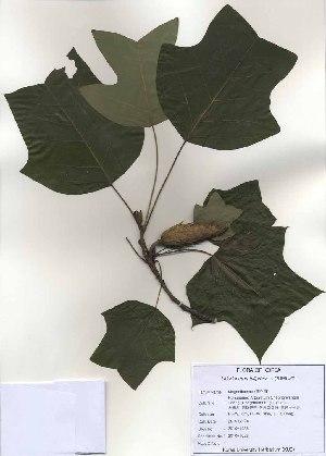 ( - PDBK2010-1023)  @11 [ ] Copyright (2010) Ki Joong Kim Korea University Herbarium (KUS)
