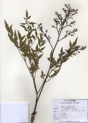 ( - PDBK2010-1424)  @11 [ ] Copyright (2010) Ki Joong Kim Korea University Herbarium (KUS)
