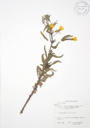 ( - SNEW046_A)  @11 [ ] Copyright (2009) Steven Newmaster University of Guelph BIO Herbarium