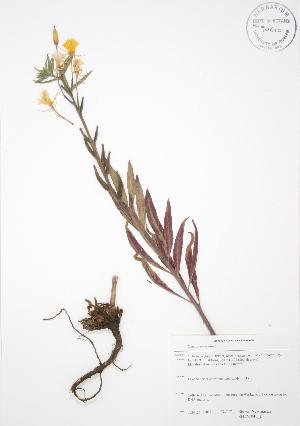 ( - SNEW046_B)  @11 [ ] Copyright (2009) Steven Newmaster University of Guelph BIO Herbarium