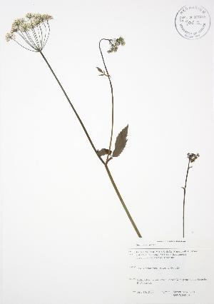 ( - SNEW048_A)  @11 [ ] Copyright (2009) Steven Newmaster University of Guelph BIO Herbarium
