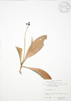( - SNEW061_B)  @11 [ ] Copyright (2009) Steven Newmaster University of Guelph BIO Herbarium