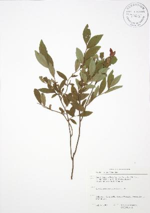 ( - SNEW064_A)  @11 [ ] Copyright (2009) Steven Newmaster University of Guelph BIO Herbarium