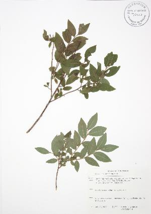 ( - SNEW064_B)  @11 [ ] Copyright (2009) Steven Newmaster University of Guelph BIO Herbarium