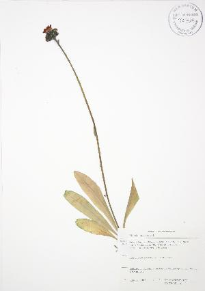 ( - SNEW051_A)  @11 [ ] Copyright (2009) Unspecified University of Guelph BIO Herbarium