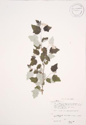 ( - JAG 0602)  @11 [ ] Copyright (2009) Steven Newmaster University of Guelph BIO Herbarium