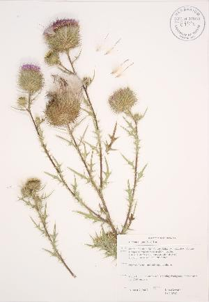 ( - JAG 0712)  @11 [ ] Copyright (2009) Steven Newmaster University of Guelph BIO Herbarium