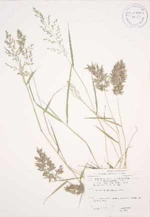 ( - JAG 0701)  @11 [ ] Copyright (2009) Steven Newmaster University of Guelph BIO Herbarium