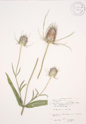 ( - JAG 0710)  @11 [ ] Copyright (2009) Steven Newmaster University of Guelph BIO Herbarium