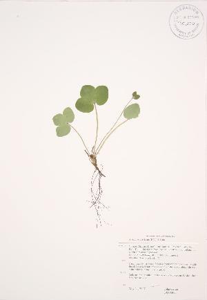 ( - JAG 0475)  @11 [ ] Copyright (2009) Steven Newmaster University of Guelph BIO Herbarium