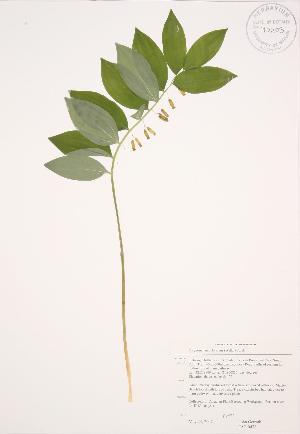 ( - JAG 0478)  @11 [ ] Copyright (2009) Steven Newmaster University of Guelph BIO Herbarium