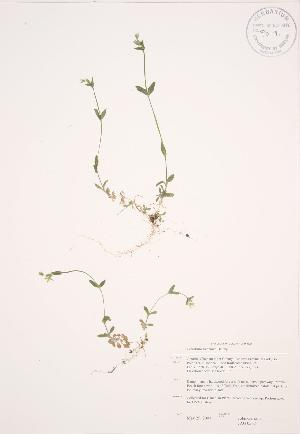 ( - JAG 0507)  @11 [ ] Copyright (2009) Unspecified University of Guelph BIO Herbarium