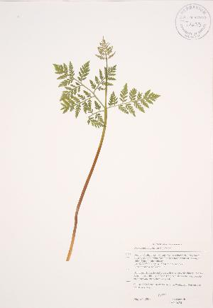 ( - JAG 0474)  @11 [ ] Copyright (2009) Steven Newmaster University of Guelph BIO Herbarium