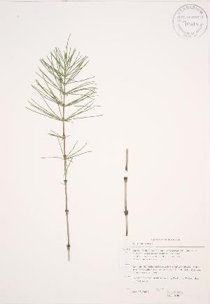 ( - JAG 0498)  @11 [ ] Copyright (2009) Steven Newmaster University of Guelph BIO Herbarium