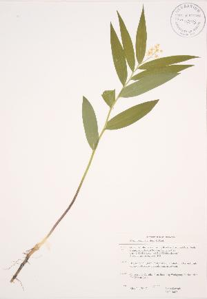 ( - JAG 0485)  @11 [ ] Copyright (2009) Unspecified University of Guelph BIO Herbarium