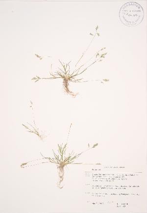 ( - JAG 0487)  @11 [ ] Copyright (2009) Steven Newmaster University of Guelph BIO Herbarium