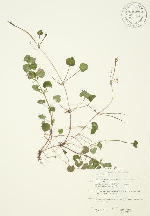 ( - JAG 0525)  @11 [ ] Copyright (2009) Steven Newmaster University of Guelph BIO Herbarium