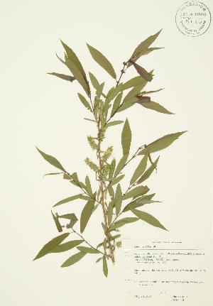 ( - JAG 0530)  @11 [ ] Copyright (2009) Steven Newmaster University of Guelph BIO Herbarium