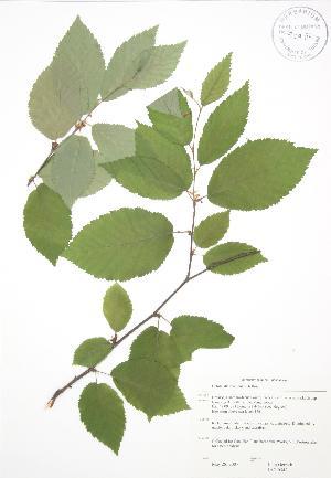 ( - JAG 0542)  @11 [ ] Copyright (2009) Steven Newmaster University of Guelph BIO Herbarium
